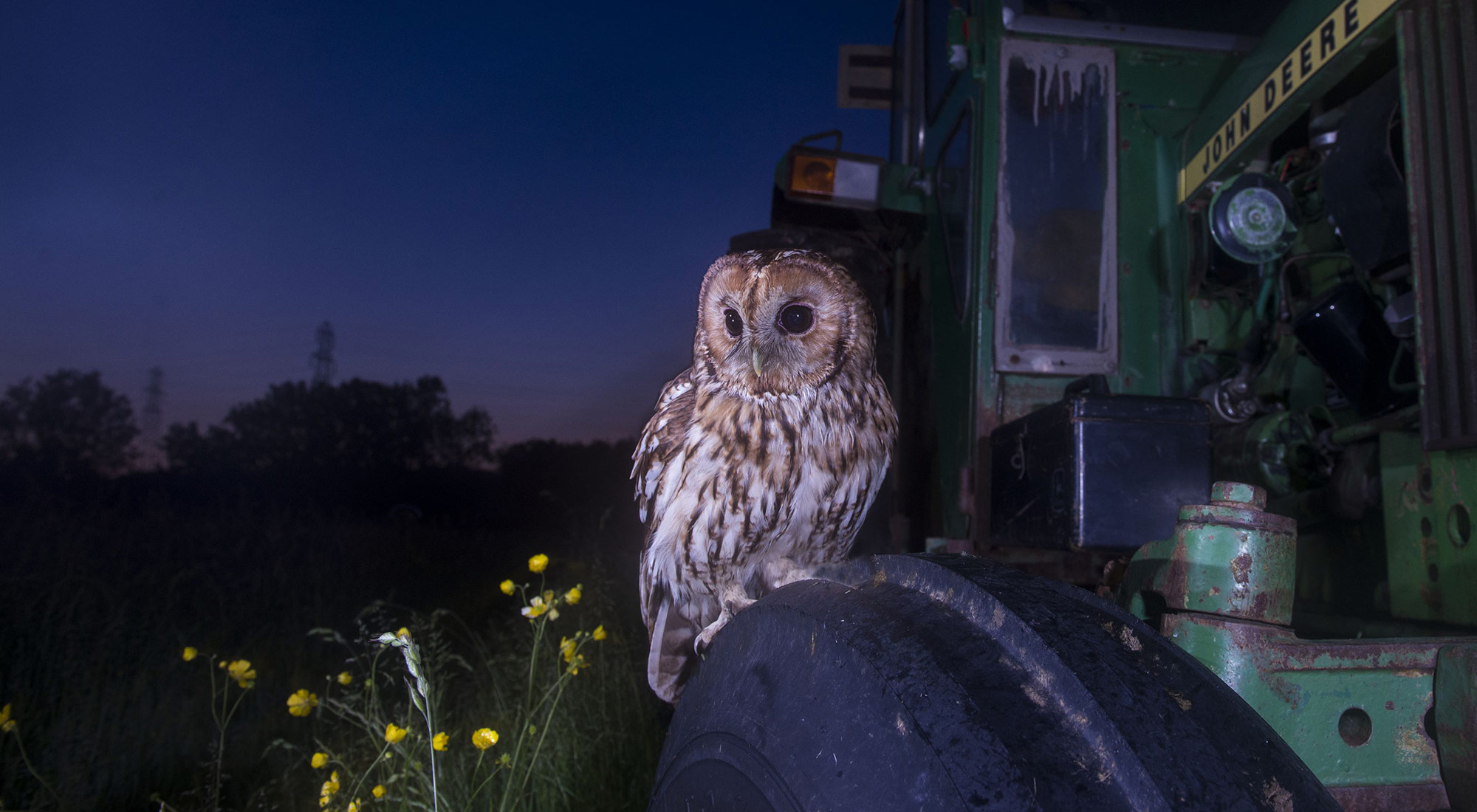 Wildlife Photography Hides Hide photography Bourne Lincolnshire tractor john deere bourne tractors perched baited tailor made photography wildflowers buttercups wild flowers tom robinson nikon wide angle remote release flash tawny owl
